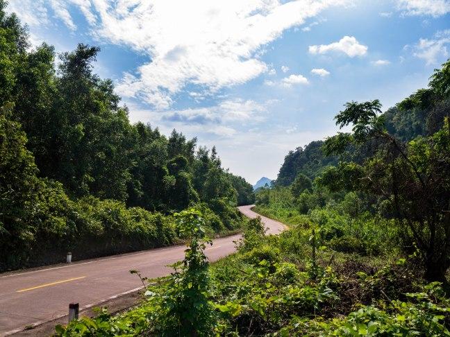 Jungle roads.